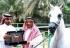 Arabia Saudi: Un caballo será ejecutado por homosexualidad