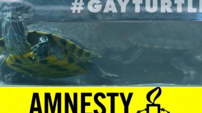 Turquía y la absurda homofobia por una ¿tortuga gay?