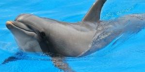 Estudio indica que los Delfines son más Gay de lo que pensábamos