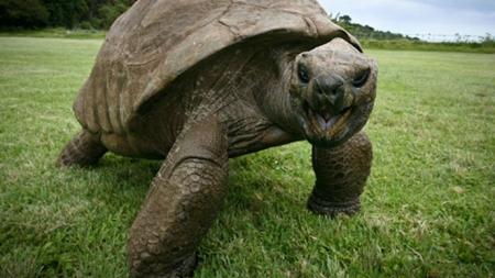 La tortuga más vieja del planeta es gay