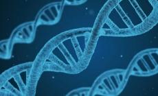 El ADN podría ser responsable de la identidad de género
